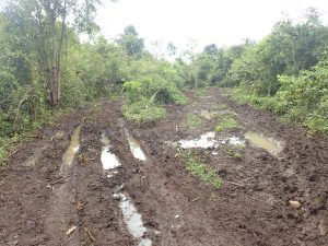 Mud and jeep tracks in the jungle